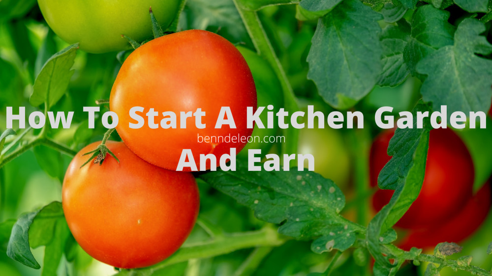 How to start a garden and earn money from it
